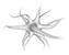 NeuroNate – Neuroscientist, Educator, Science Communicator, Artist